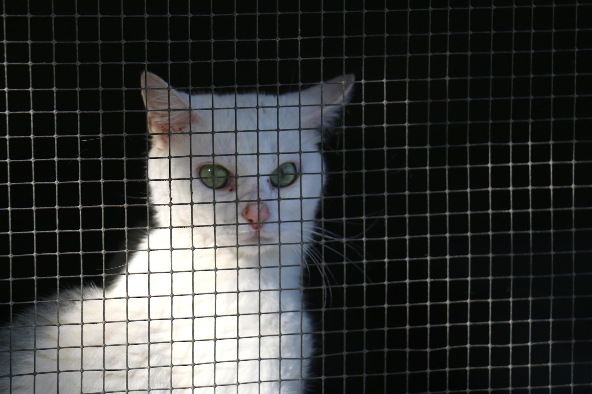 S p a des pyr n es orientales adoption d 39 un animal au - Spa perpignan sud ...